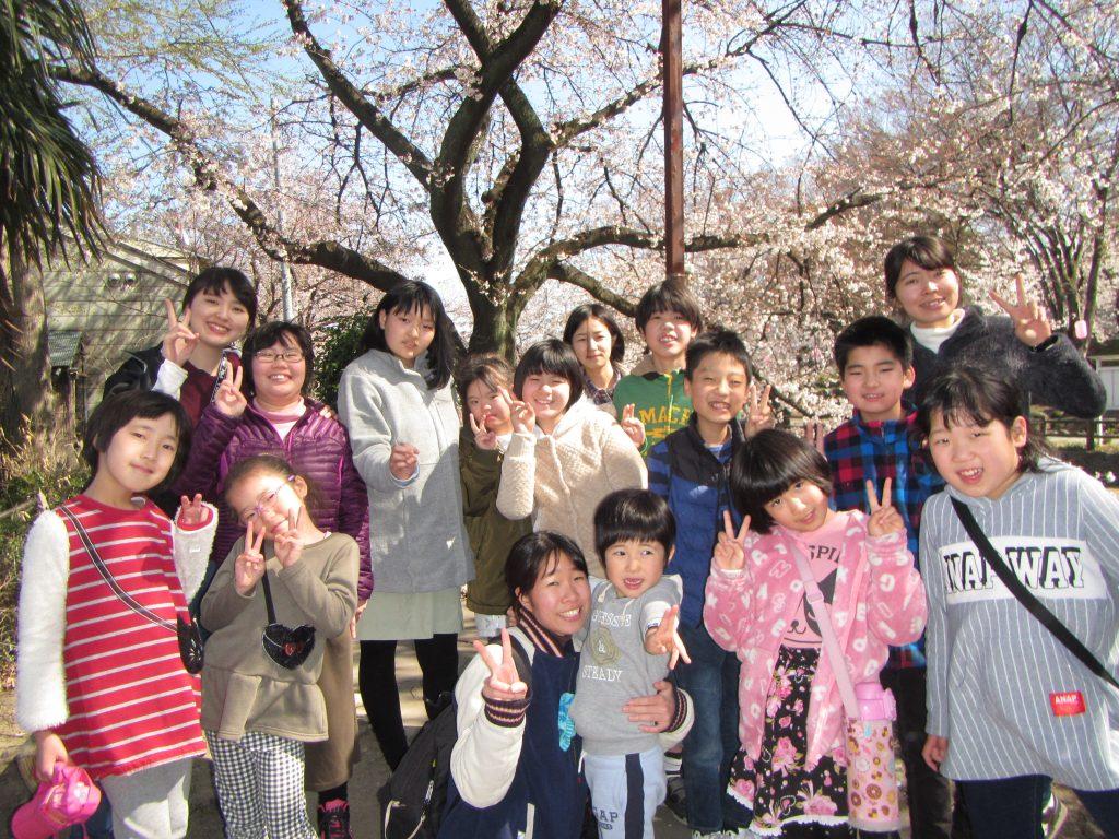 新年度スタート 桜、満開!!