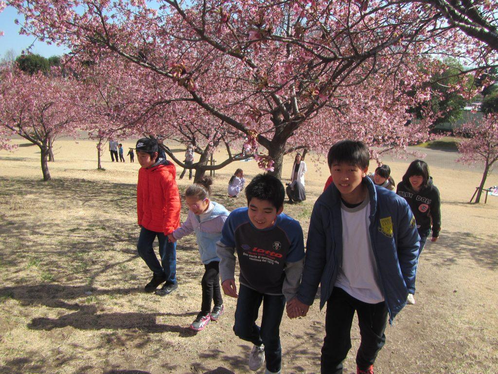 公園で遊ぼう いせさき市民のもり公園、梅の花が満開。